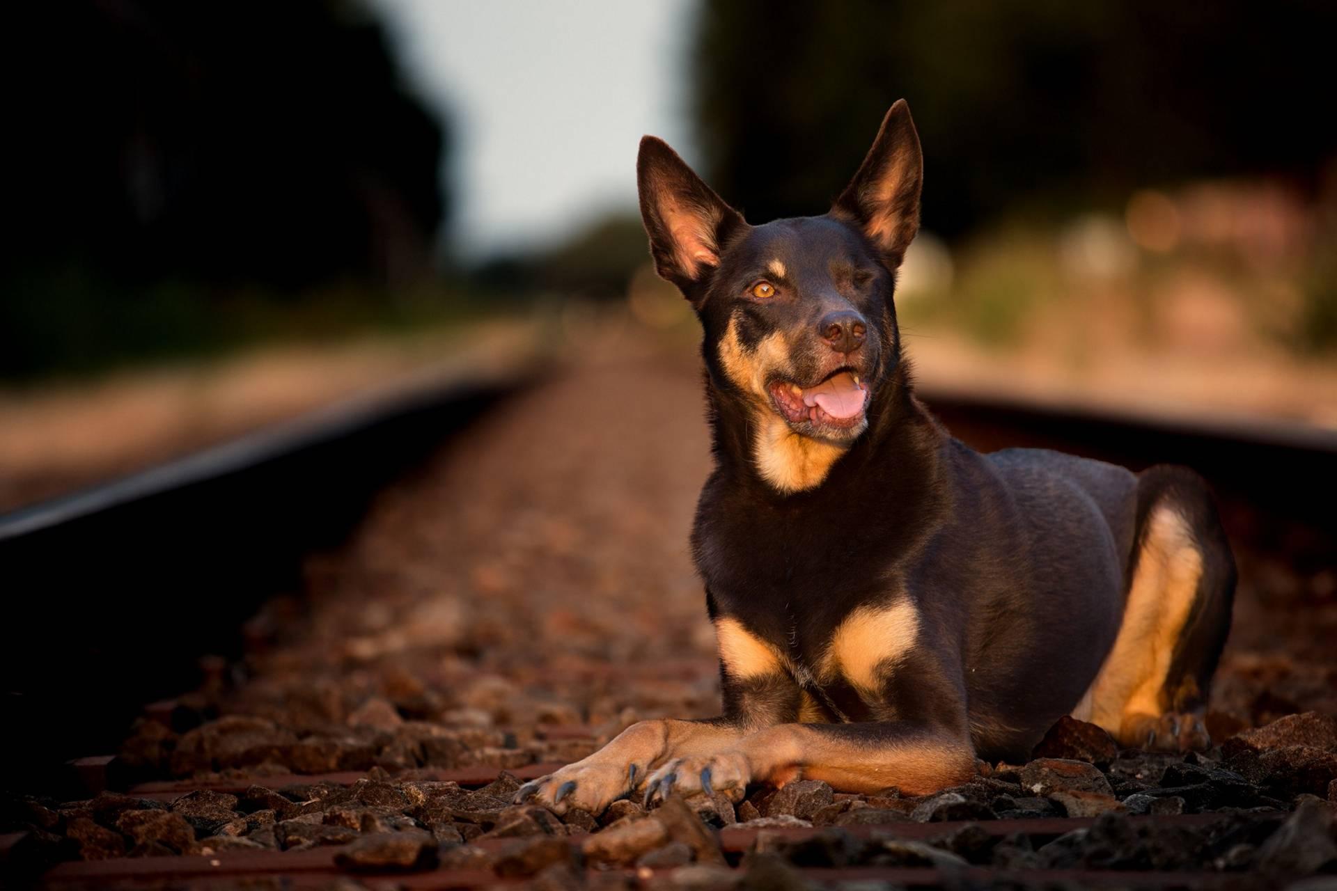 Bruno op het station